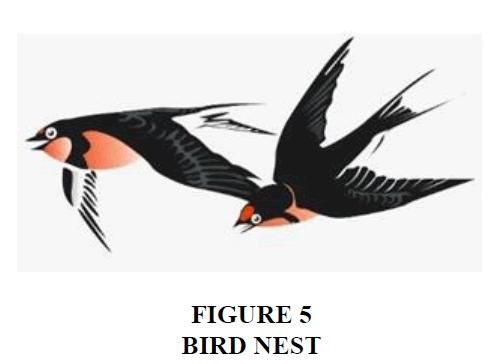 decision-sciences-Bird-nest
